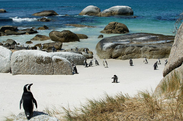 Cape-Town-beach-Simons-Town