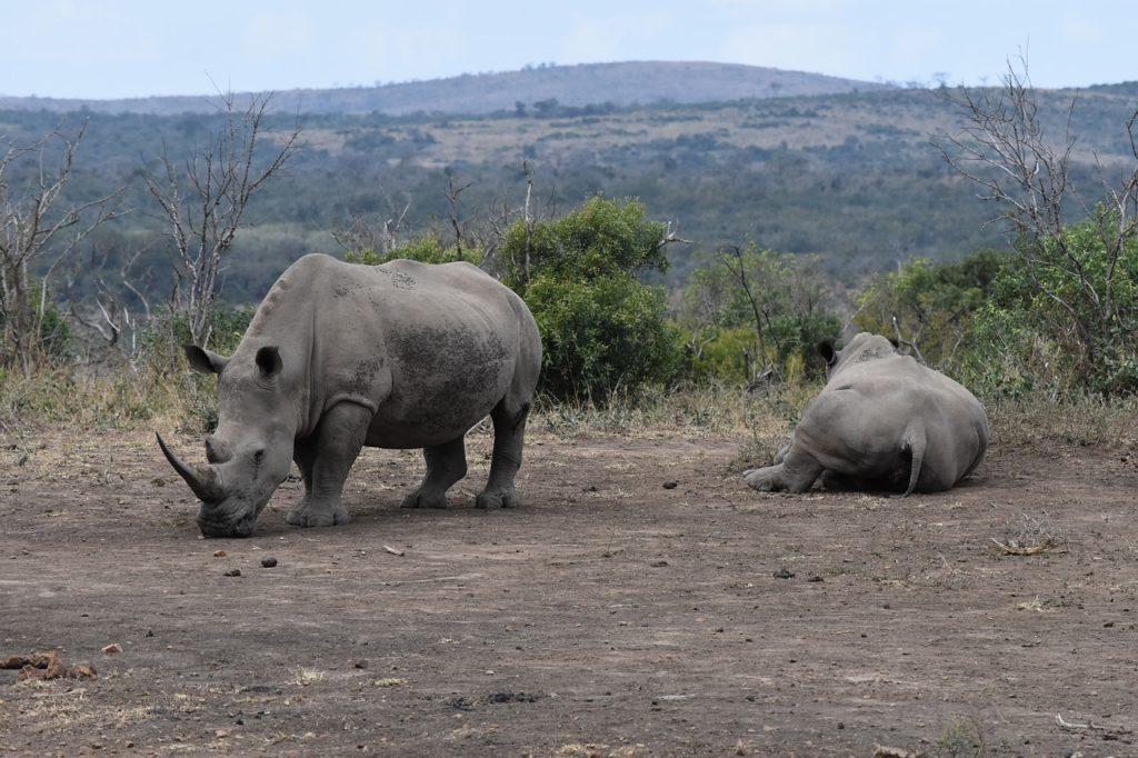 Safari experience South Africa