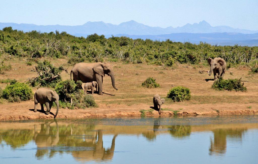 Safari tour South Africa